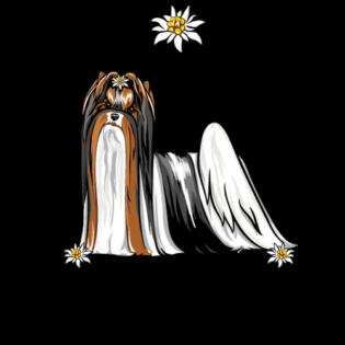 biewer terrier breeder california